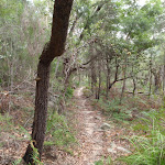Gibbergong track South of Lovers Jump creek