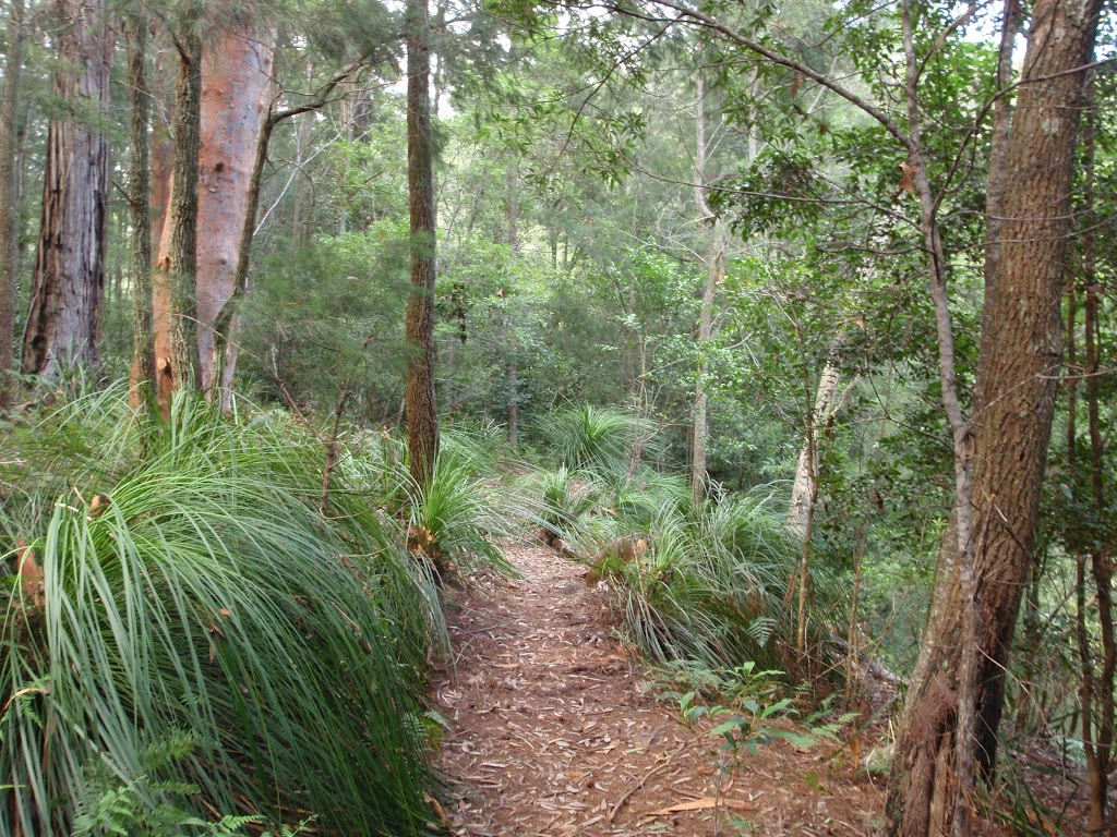Gibbergong track along side the upper Cockle Creek