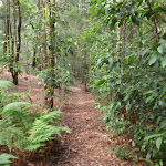 Shady forest on the Gibbergong track