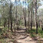 Heading through the trees (117409)