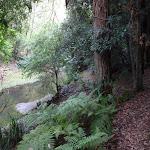 Gibbergong following Cockle Creek