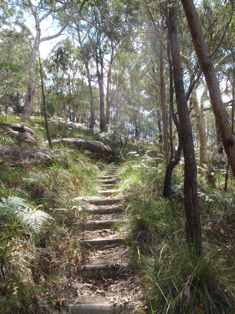 Log steps on Birrawana Track (117613)