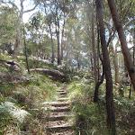 Log steps on Birrawana Track (117613)