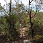 Heath beside track (117700)
