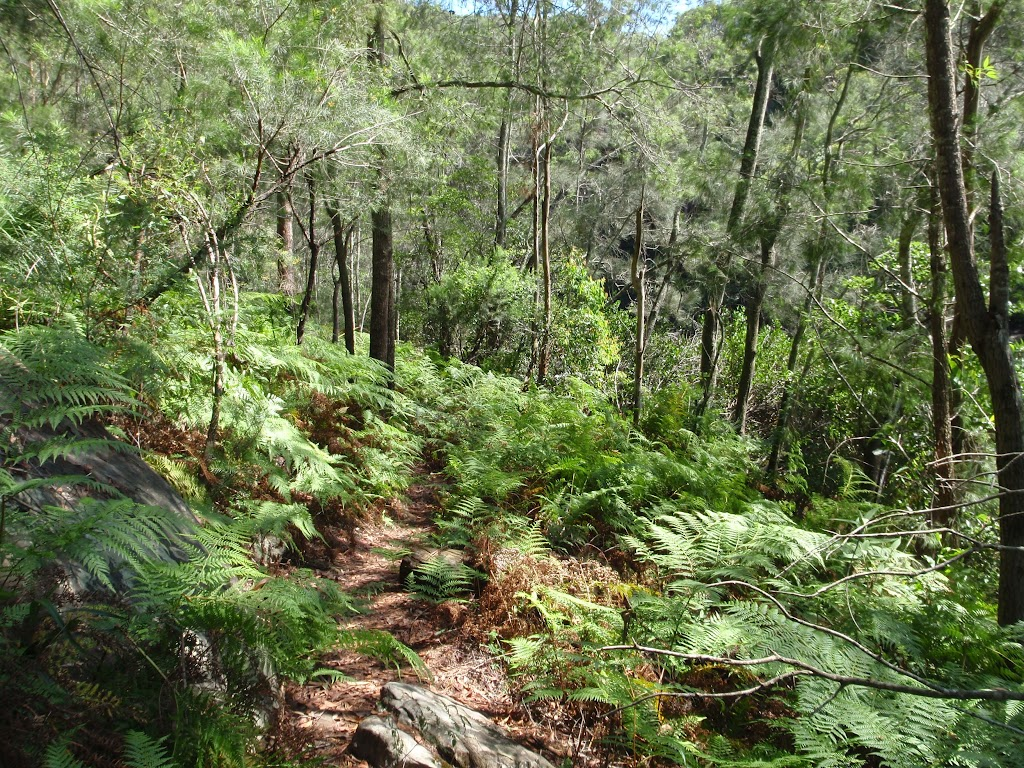 Warrimoo Track through the ferns (117787)