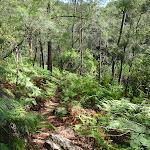 Warrimoo Track through the ferns