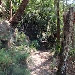 Heading through the bush (117940)