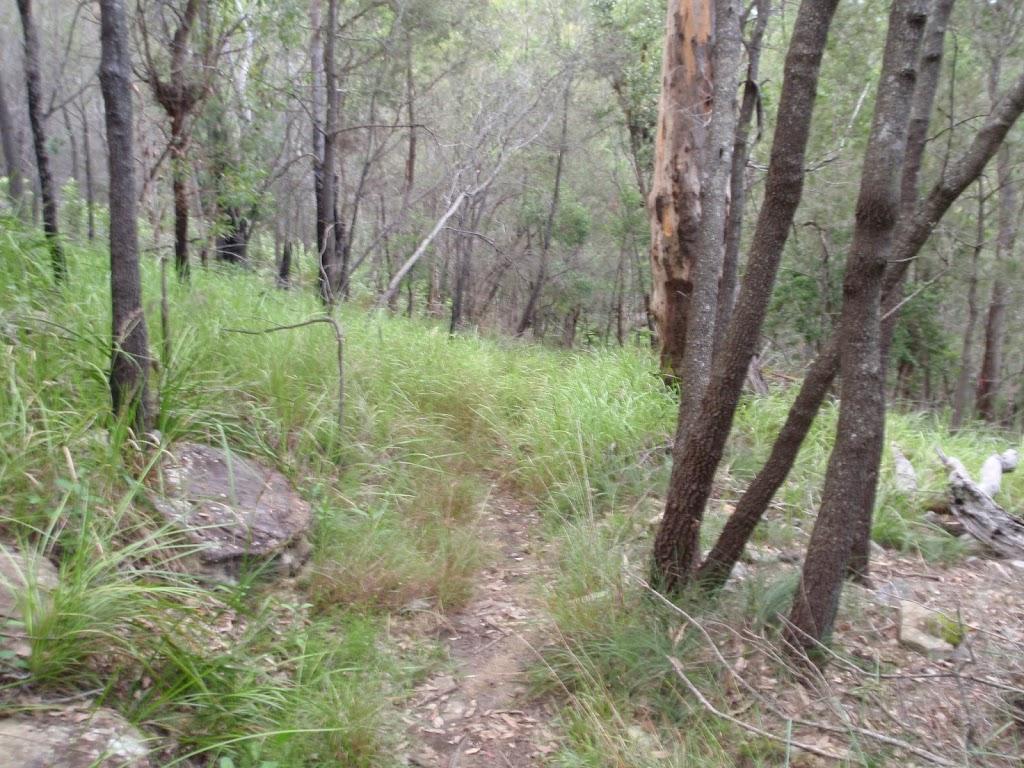 Track through trees along Birwanna Track