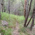 Track through trees along Birwanna Track (117979)