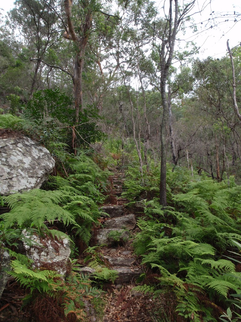 Ferns beside Birwanna Track