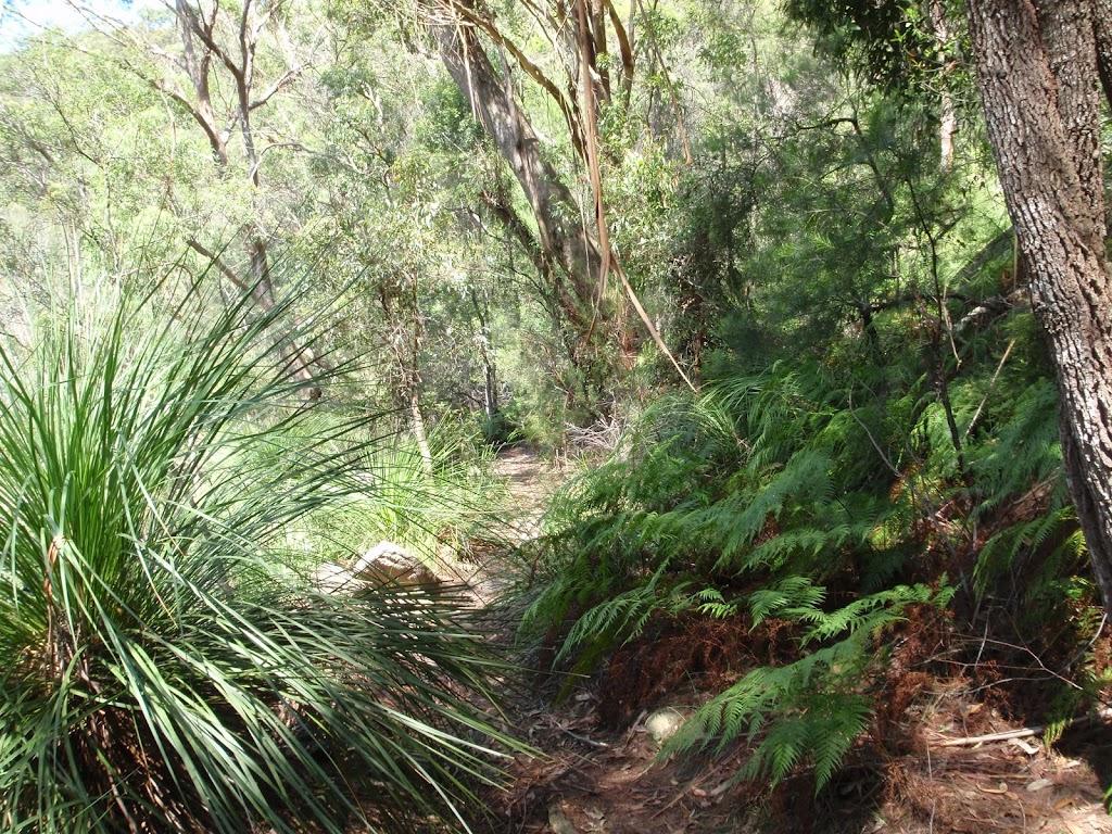 Ferns on Warrimoo Track
