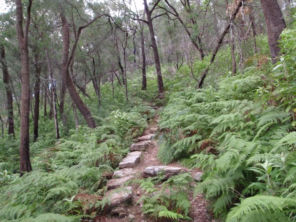 Rock steps on the Mt Kuring-gai track
