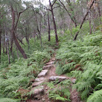 Rock steps on the Mt Kuring-gai track (118504)