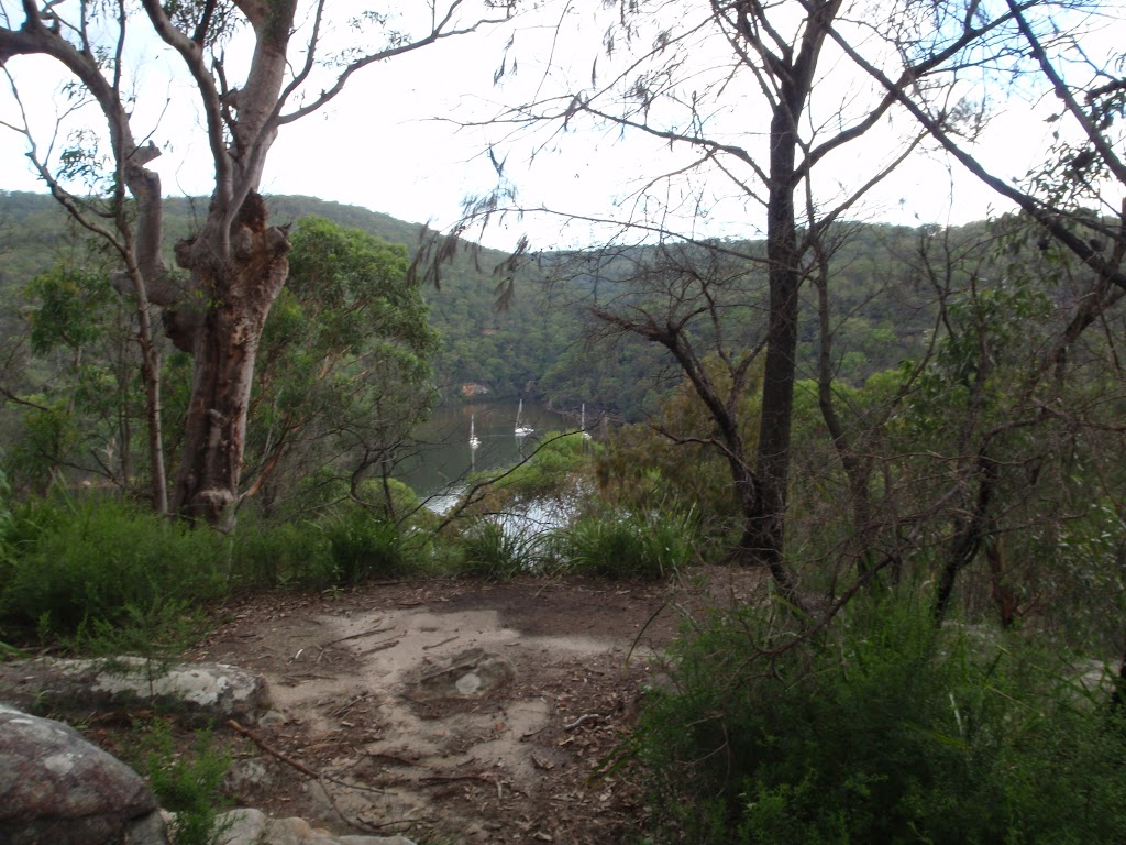 On Mt Ku-ring-gai track above Berowra track (118594)