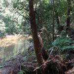 Cockle Creek on Gibbergong track