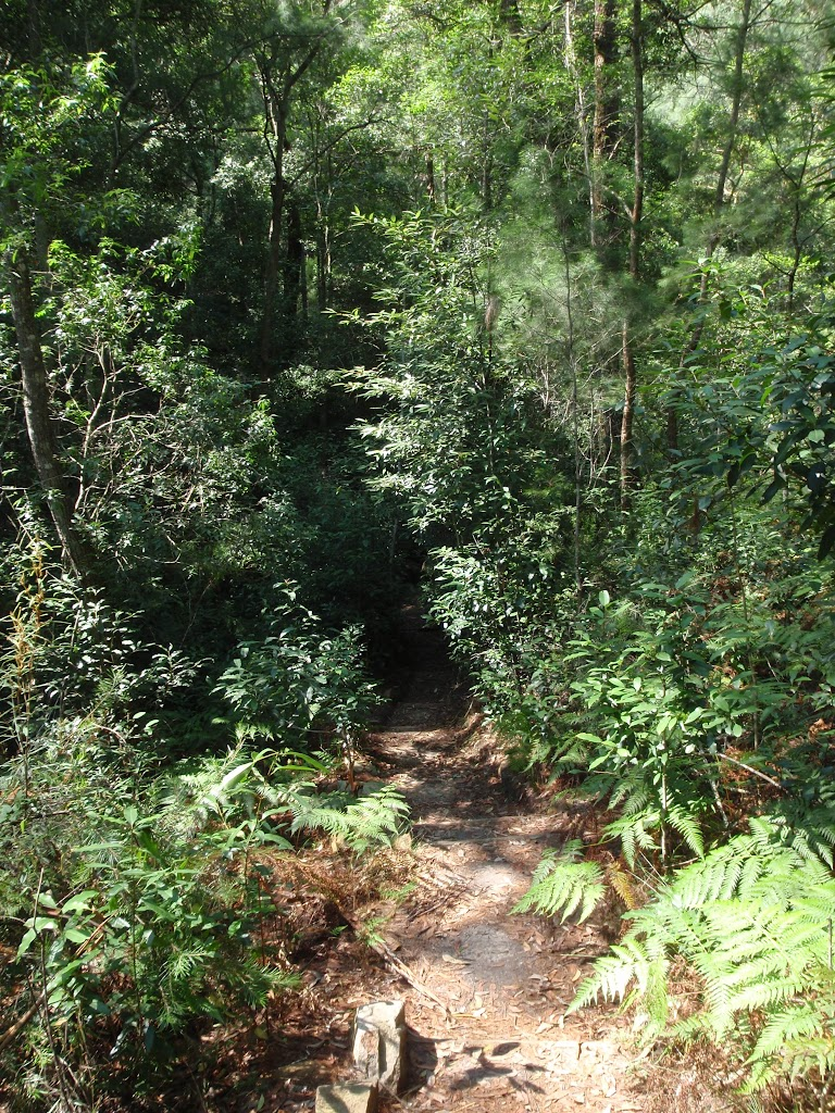 Rainforest track
