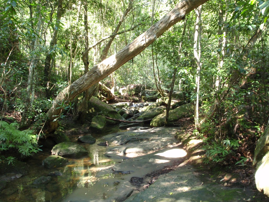 Creek and rainforest