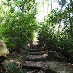 Rainforest Track (118792)