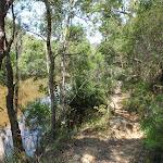Cowan Creek next to Warrimoo Track (119134)