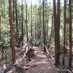 Heading through the trees (119227)