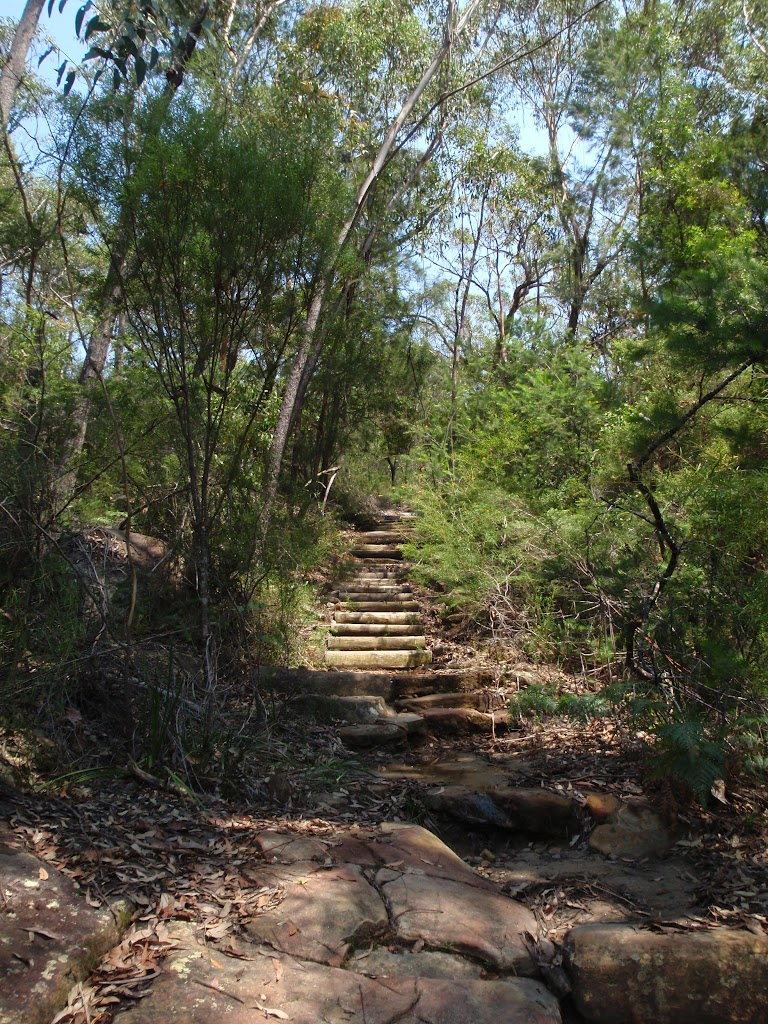 Steps on Sphinx Walking track (119338)