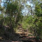 Steps on Sphinx Walking track (119338)
