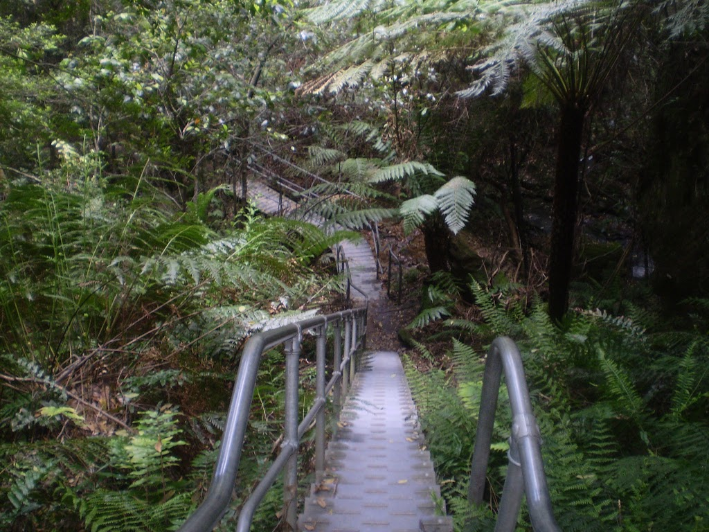 Stairs down into Leura Forest (11948)