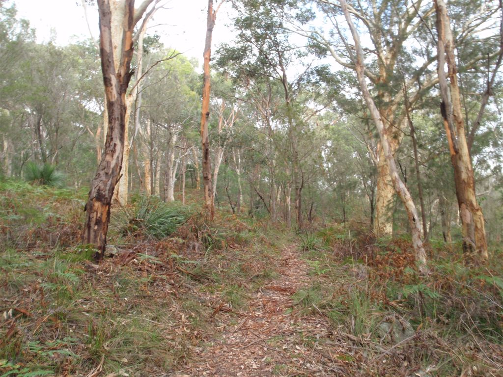 Birrawana Track down through the bush