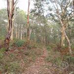 Birrawana Track down through the bush (119512)
