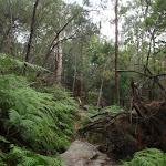 Continuing through the bush (119641)