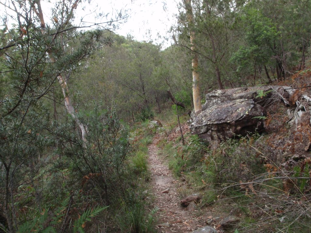 Birrawanna north of Cockle Creek lookout