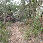 Birrawana Track above Bobbin Head