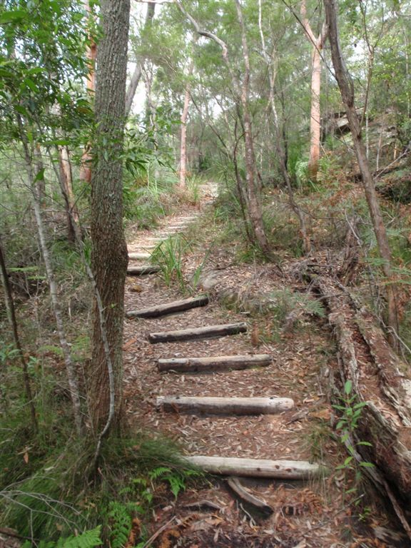 Log Steps on Birrawana Track (119800)