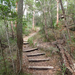 Log Steps on Birrawana Track