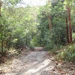 Heading through the bush (120511)