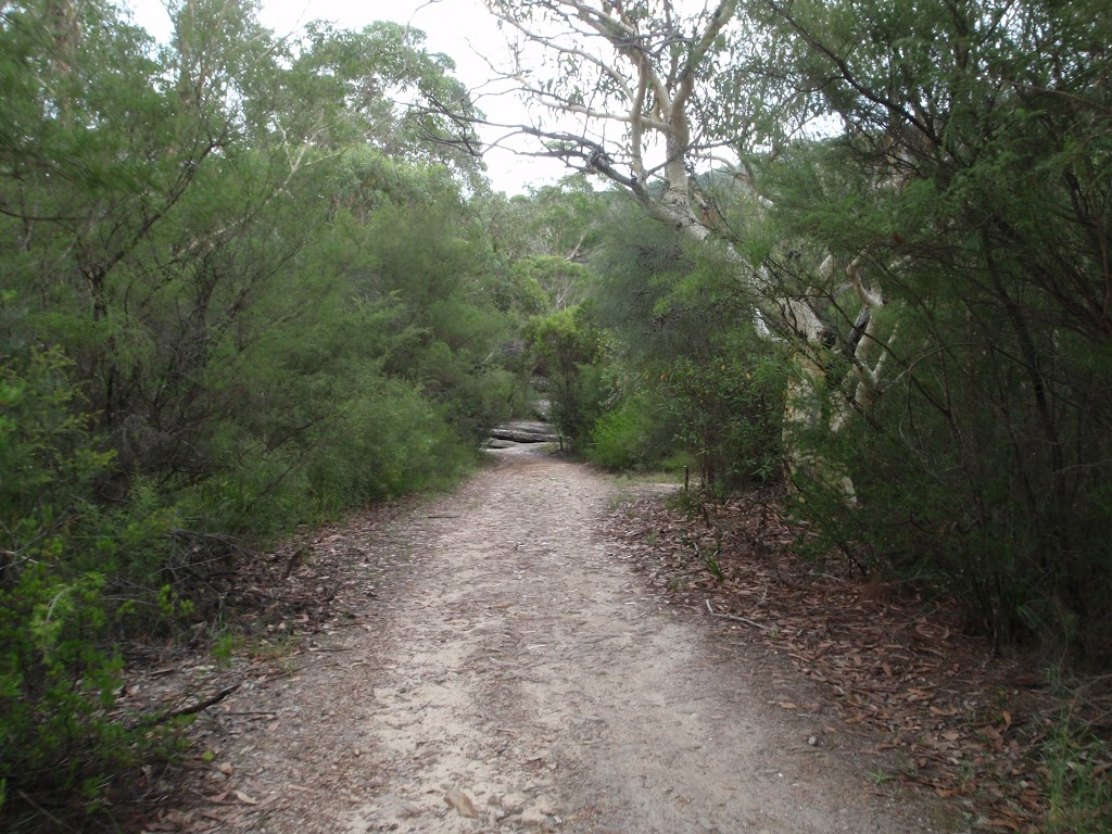 Continuing through the bush