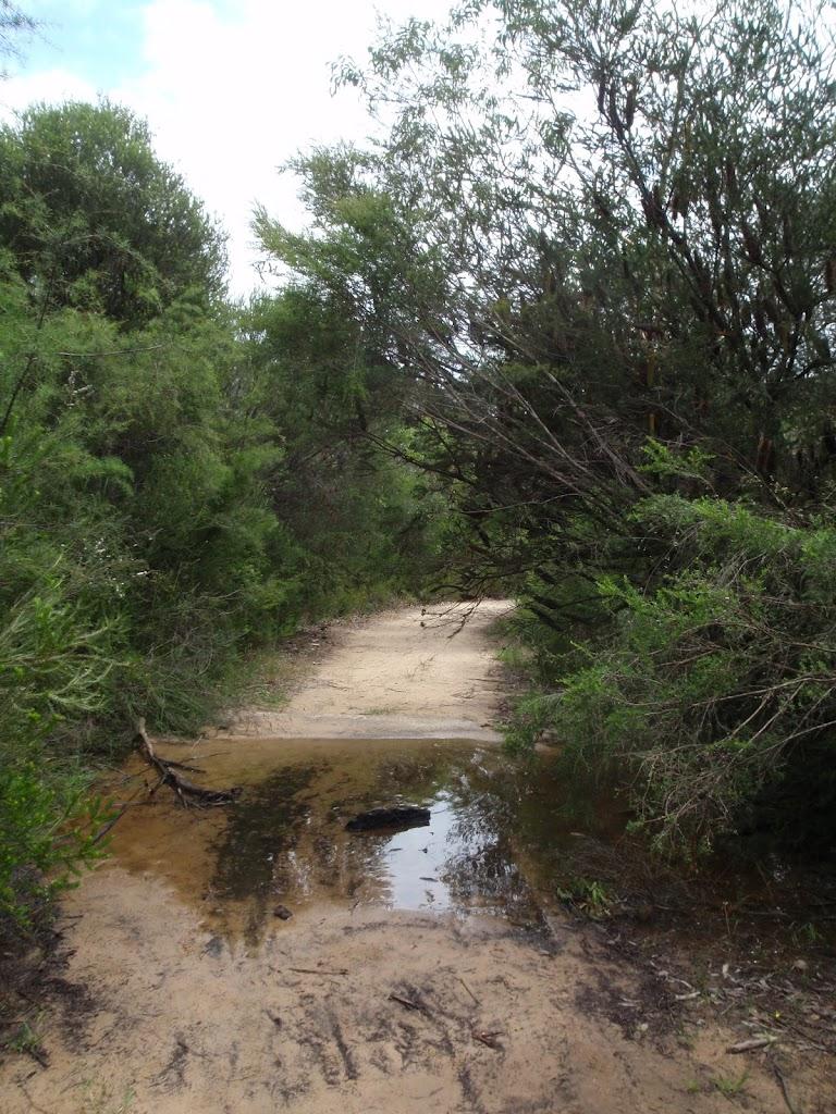Cascades Track (121099)