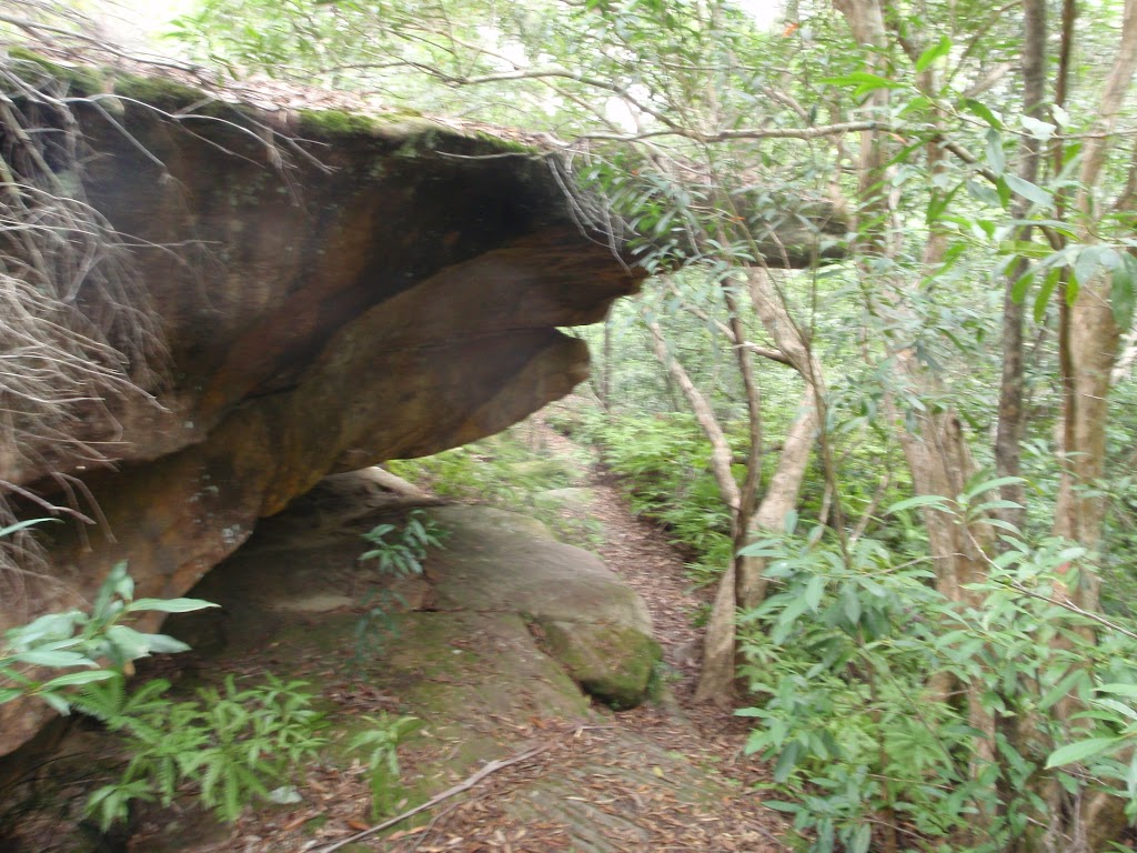 Small cave on Middle Harbour Track