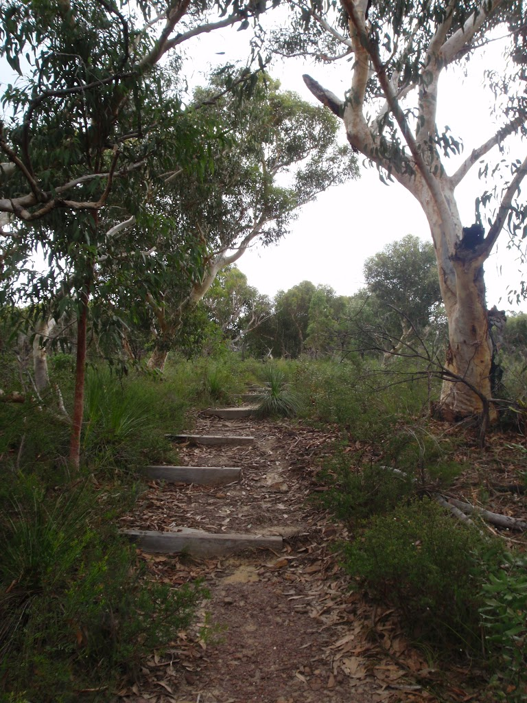 Following the Baungaroo Track (122065)