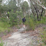 wandering along Bungaroo track (122254)