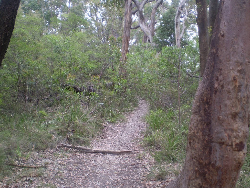 Continuing along the bushtrack (12395)