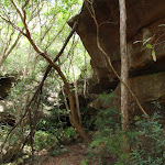 Through the bush (124330)