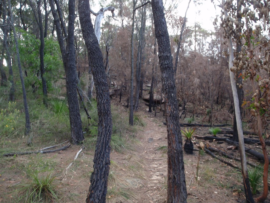 Track dividing the burnt and unburnt bushland (124837)
