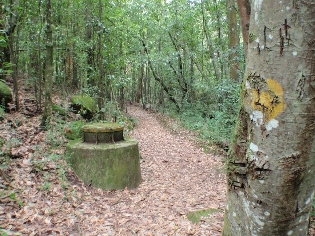 Two Creeks Track along side Gordon Creek