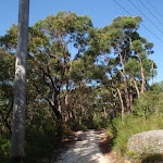 Currie Rd Service trail