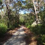 Heading into thicker vegetation