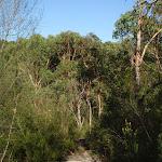 Natural Bridge Track (127660)