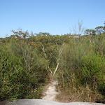 Natural Bridge Track (127726)