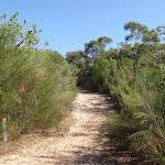 Bluff track (127930)