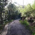 Through the bush (130048)